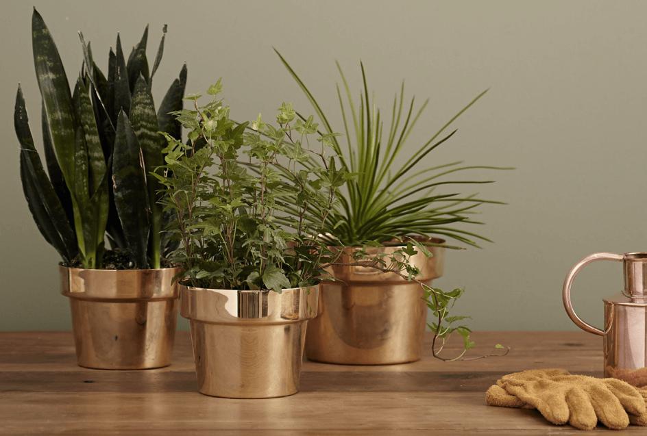 Plant + ver van je bed